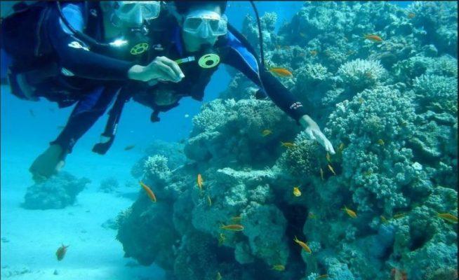 Scuba Diving Goa