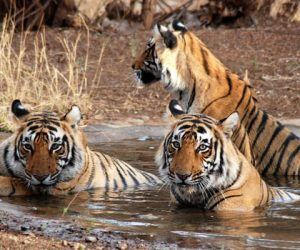 Wildlife tours in Goa