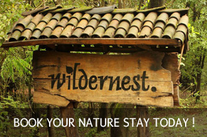 Wildernest-Nature-Resort-Goa