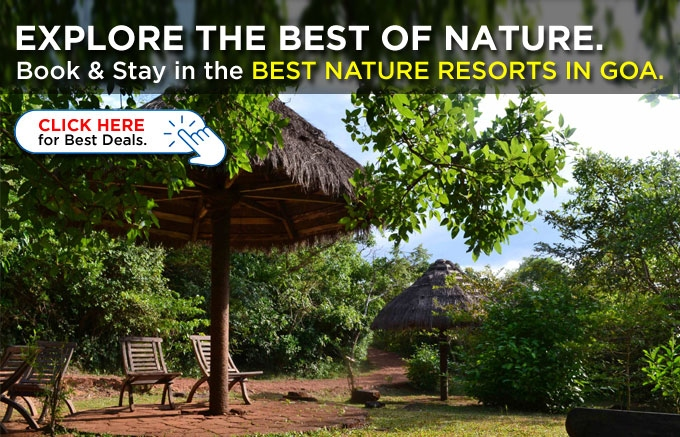 Check in at our Recommended Nature Resorts in Goa, Eco-tels in Goa & Experience wilderness.